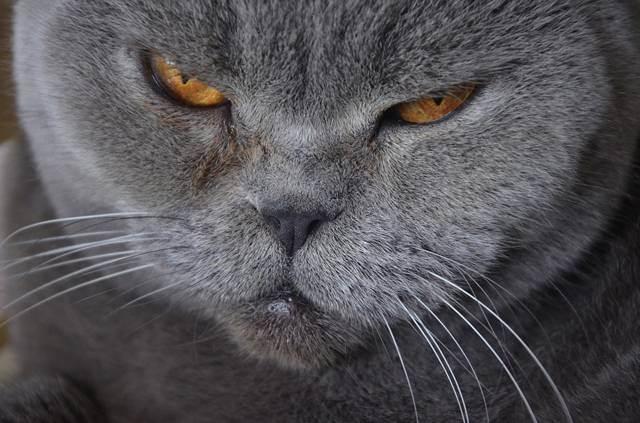 Как воспитывать и наказывать кошку правильно