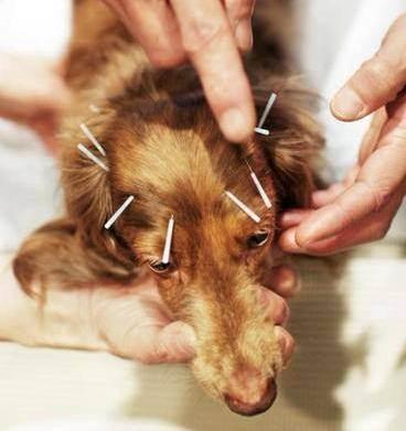 Ветеринарная гомеопатия против ран: доказательства не выдержали критики