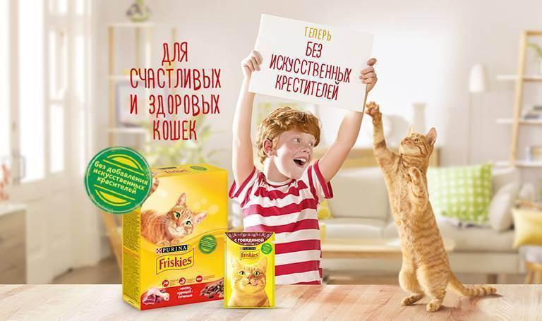 Разновидности готовых кормов для кошек