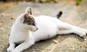 Дрожь (тремор) у котов