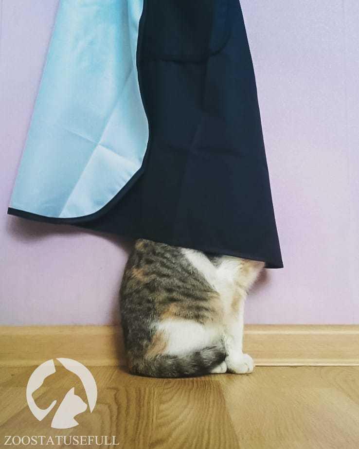 Депрессия у кошки: как распознать, причины и как лечить