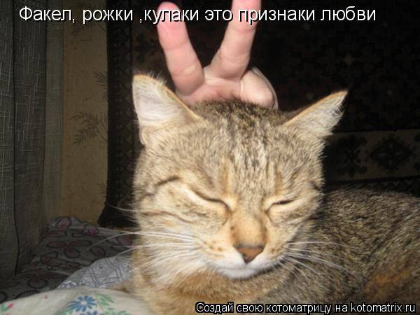 Как понять, что кошка любит своего хозяина