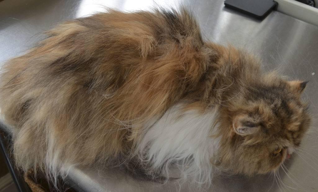 Как можно избавиться от колтунов у кошки