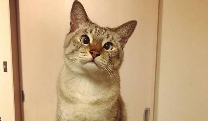 Лечится ли косоглазие у кошек