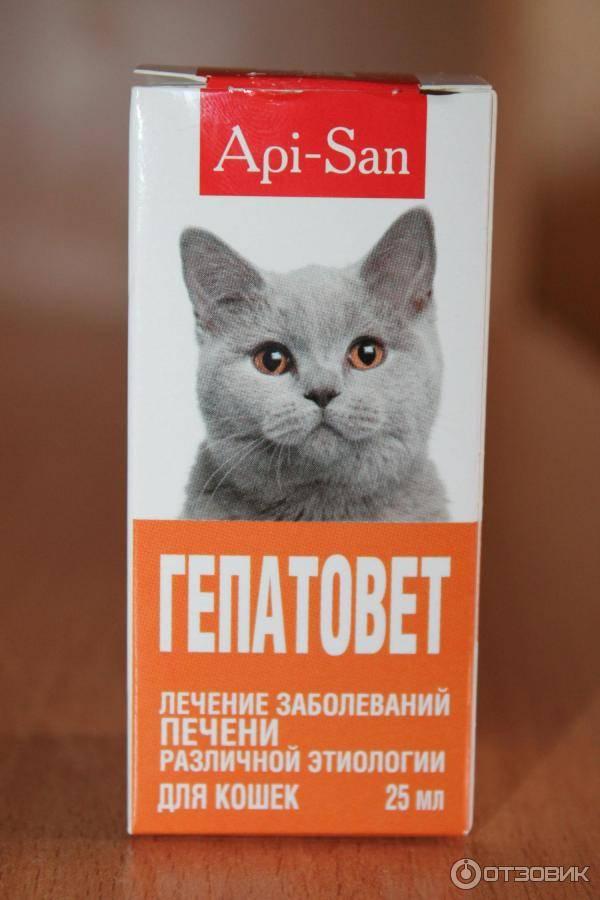 Гепатовет для кошек: инструкция по применения, состав, дозировка, аналоги