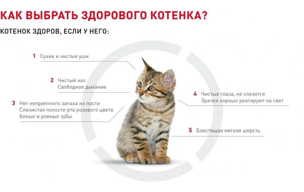 Что делать, если вы завели котёнка - лайфхакер