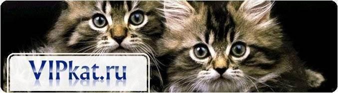 кошачье мурлыканье лечит. миф или реальность?