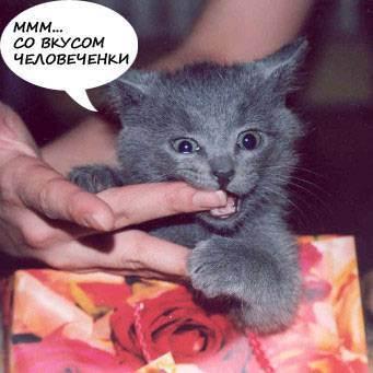 Кошка кусается: почему и что делать