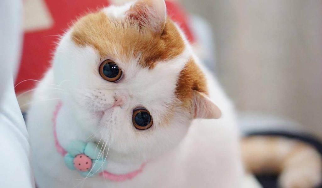 Топ 10 самых красивых пород кошек - названия, описания и фото — природа мира