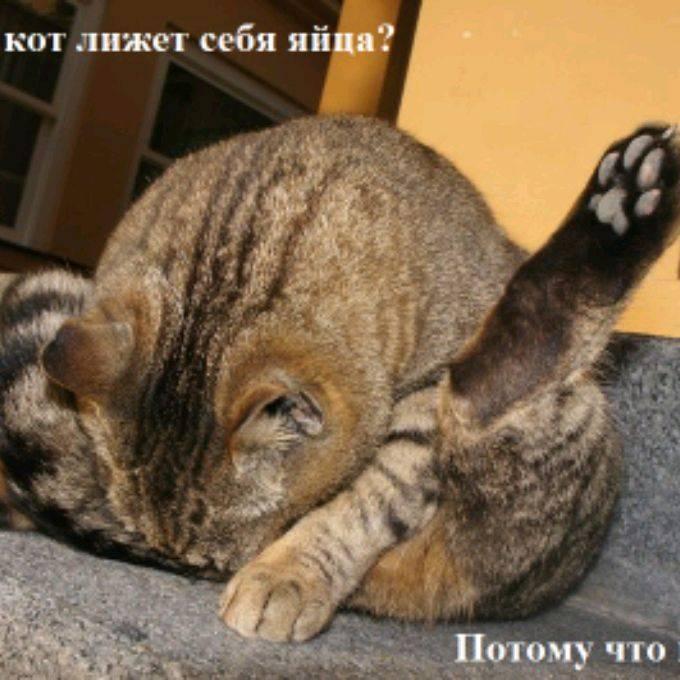Кот после кастрации вылизывает рану: причины, последствия