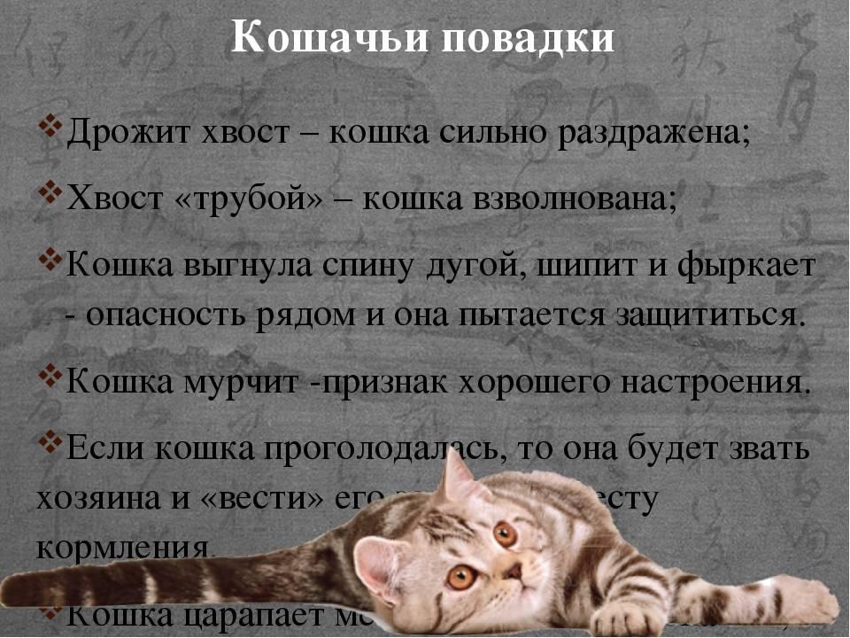 Психология и особенности поведения кошек