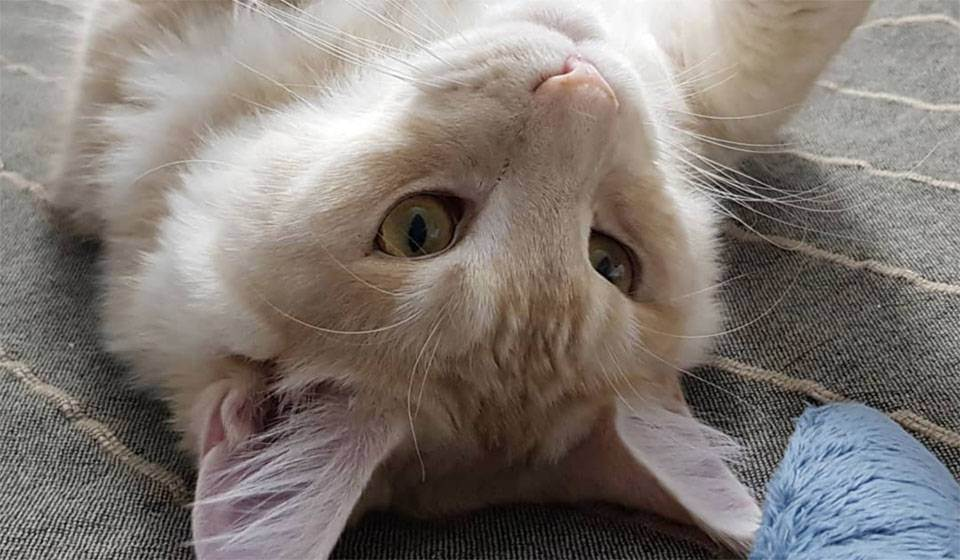 Сера для котов – зачем нужна и как применять?