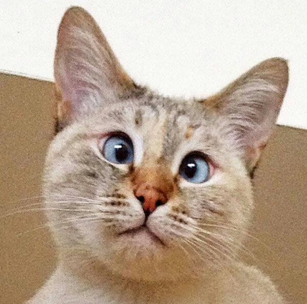 Кошки с косыми глазами