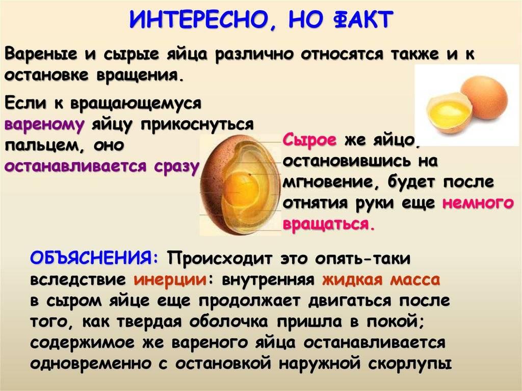 Можно ли давать котенку омлет. можно ли кошкам давать яйца? когда начинать кормить яйцами котёнка: частота и правила кормления