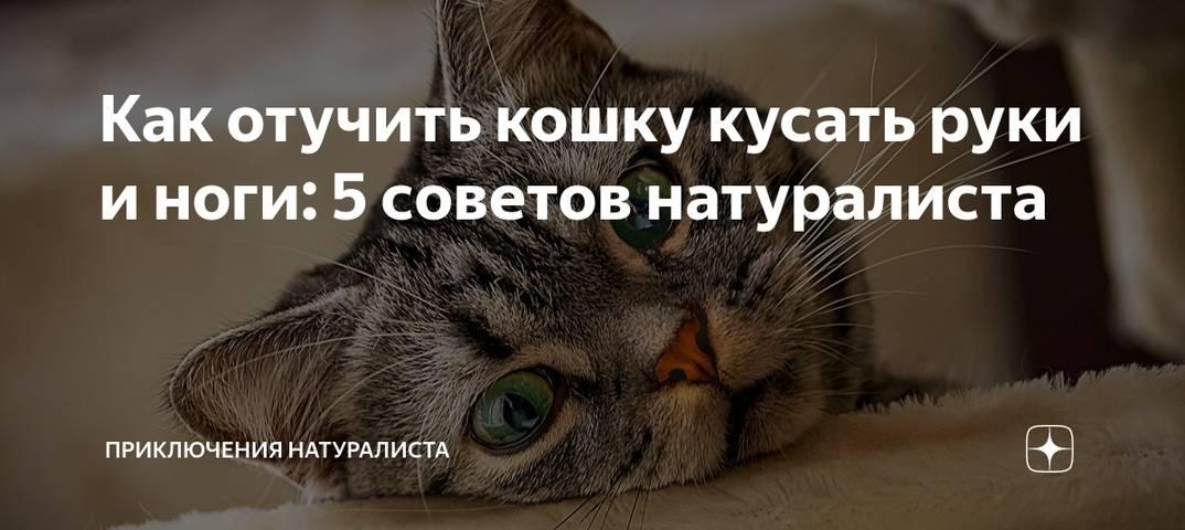 Кошка гадит на кровать, почему, что делать, как отучить