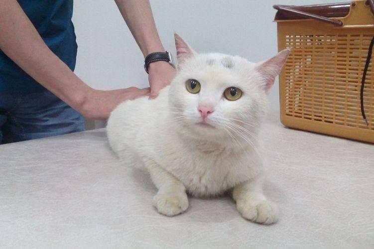 Причины и первая помощь при появлении пены у рта у кошки