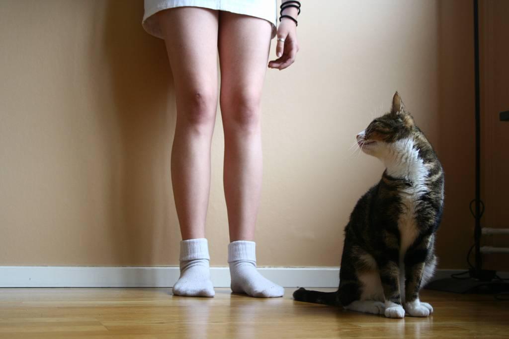 Почему кошка трется о ноги: причины и что делать почему кошка трется о ноги: причины и что делать