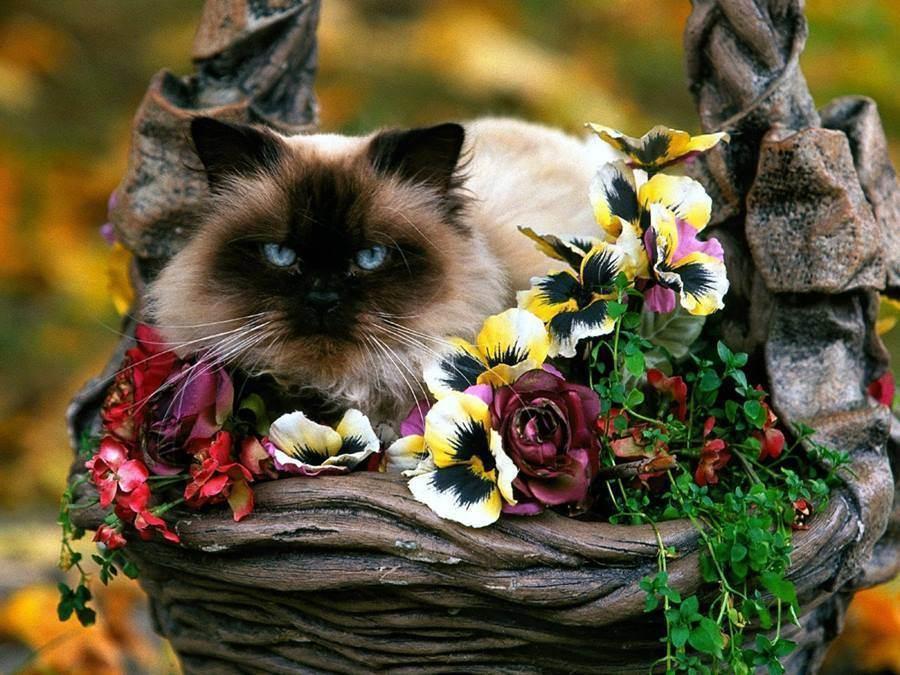 Кот надаче: правила безопасности