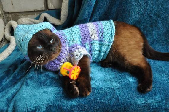 Когда и как можно проводить вязку котов и кошек: рекомендации