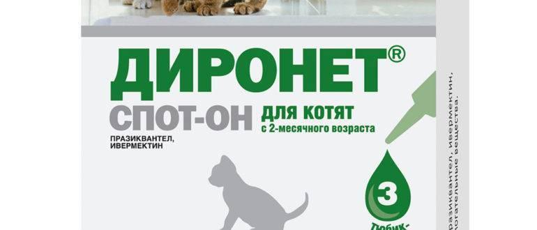 Диронет для кошек: инструкция по применению, состав препарата и особенности назначения (95 фото)