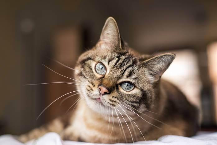 Приметы про кошек — тайны усатых и полосатых