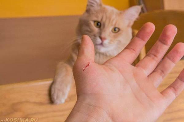 """Как отучить кота или кошку кусаться и царапаться, когда ее гладишь — """"лапы и хвост"""""""