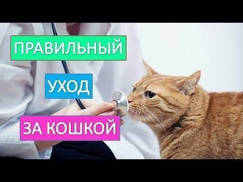 Как правильно ухаживать за зубами и деснами собак и кошек
