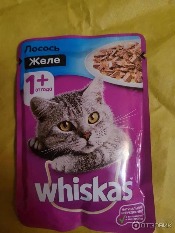Как отучить кота от вискаса и приучить к нормальной еде
