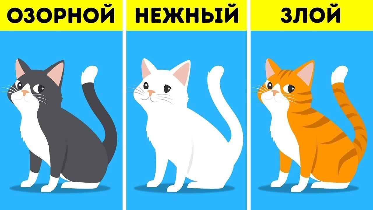 Ученые назвали 10 причин, по которым коты полезны для здоровья