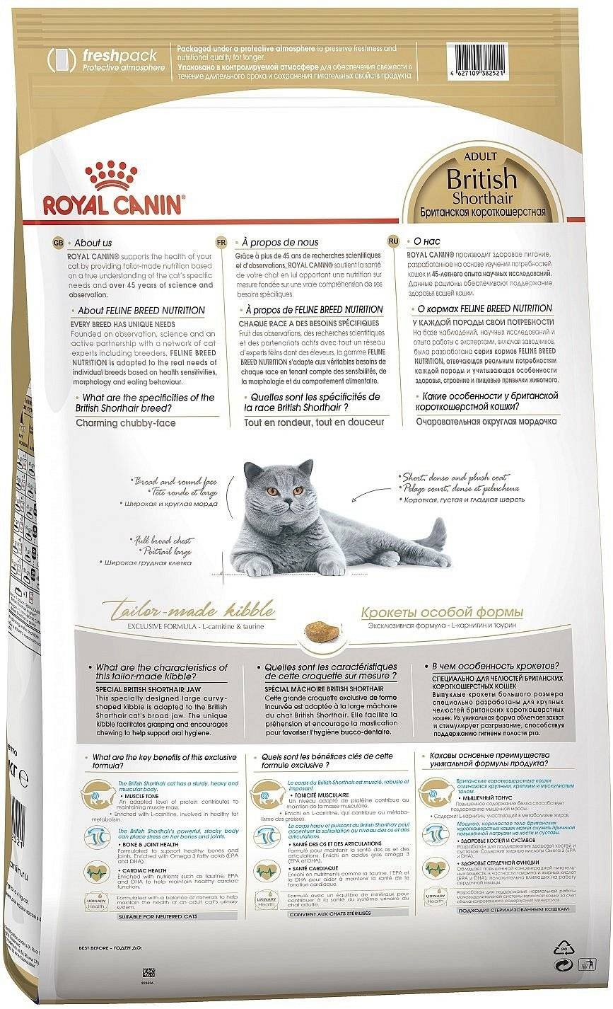 Каким кормом кормить британскую кошку: правильный рацион