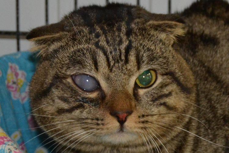 Почему кошки чихают: что делать хозяину, причины и последствия, сопутствующие симптомы, лечение