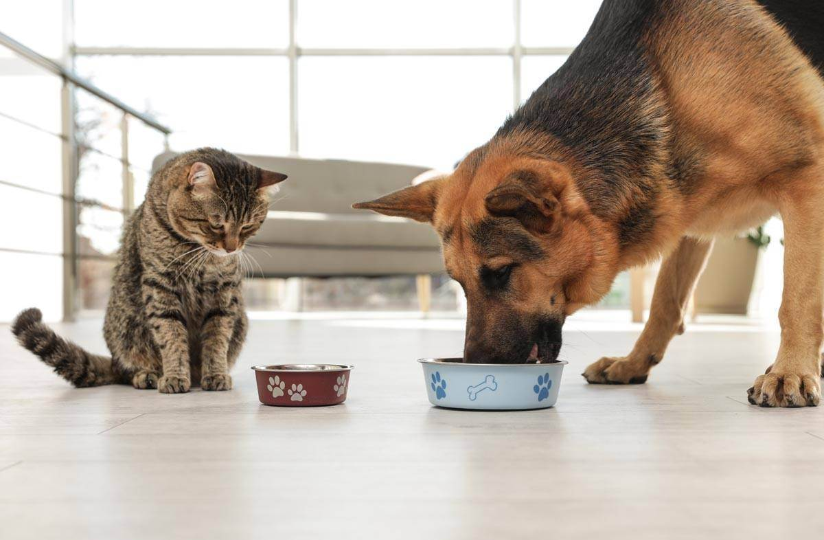 Особенности питания щенка сухим кормом