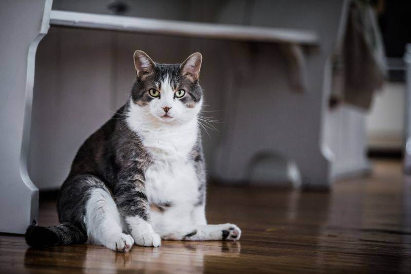 Можно ли кошкам давать куриные кости?