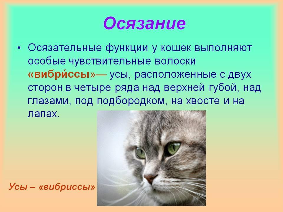 Зачем кошке усы: особенности строения, функции вибриссов, проблемы