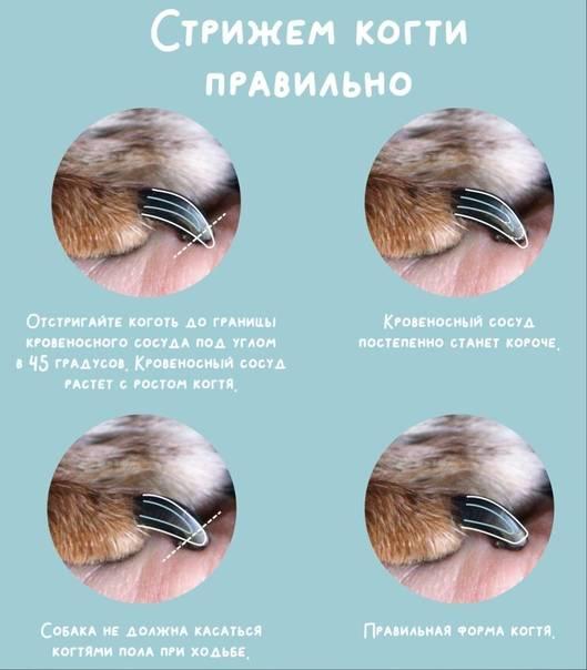 Как и чем подстричь когти котенку