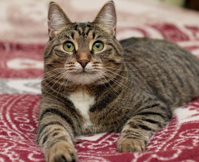 Имена и клички для полосатой кошки девочки имена и клички для полосатой кошки девочки
