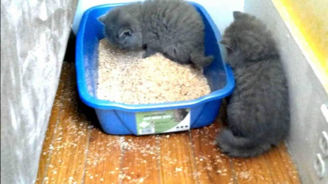 Кошка ест селикагелевый наполнитель... это опасно? - запись пользователя валерия (lero4ka0901) в сообществе домашние животные в категории кошки. болезни, прививки, советы по уходу - babyblog.ru