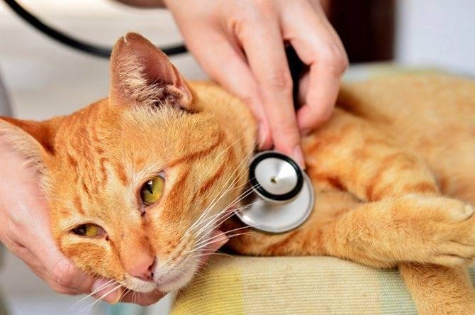 Инфаркт у кошки чем помочь