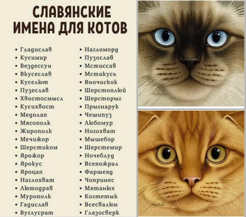 Имена для рыжих котов и кошек: список популярных, красивых и прикольных кличек