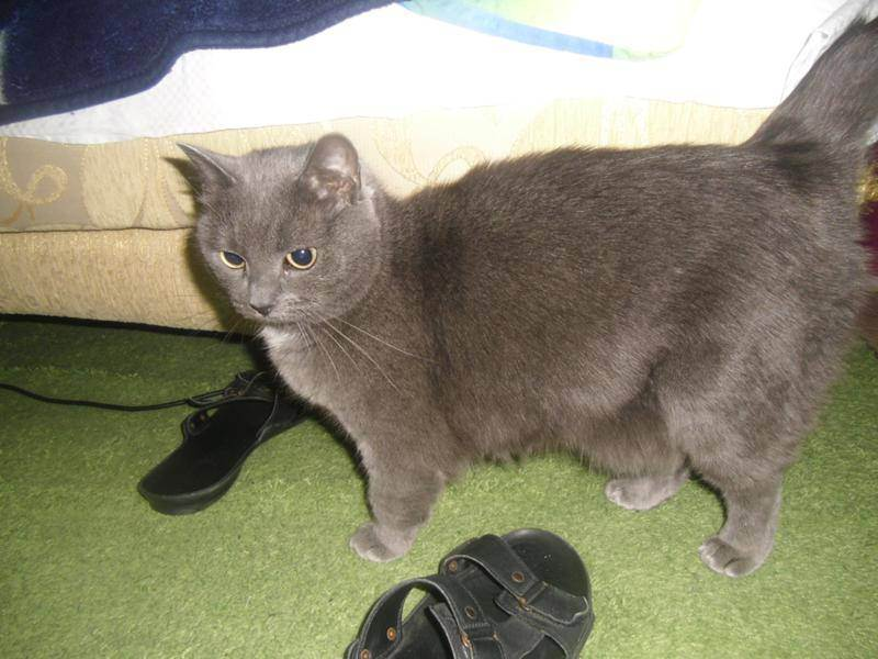 У котенка на животе кожа свисает