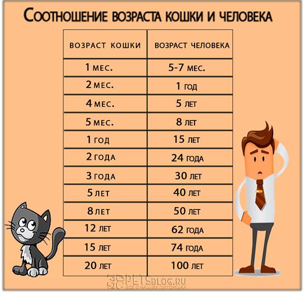 Сколько лет вашей кошке: соотношение возраста кошки и человека