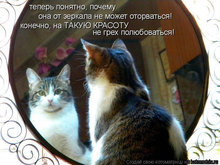 Можно ли кошкам смотреть в зеркало. видят ли коты себя в зеркале? большие кошки тоже интересуются зеркалами