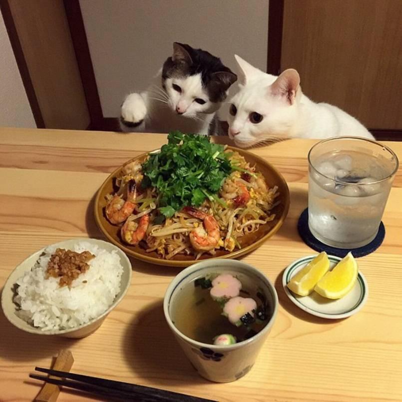 Что любят коты и кошки: интересные факты о питомцах, наблюдение владельцев за поведением взрослых любимцев и котят