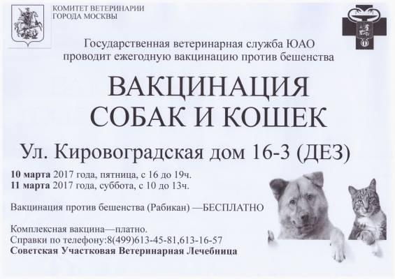Вакцинация кошек от бешенства цена - кошки и собаки