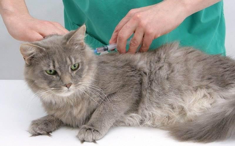 Прививки котятам - какие и когда делать, график вакцинации по возрасту