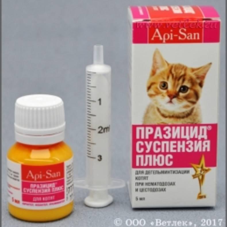 Таблетки от глистов для кошек: названия, отзывы и цены