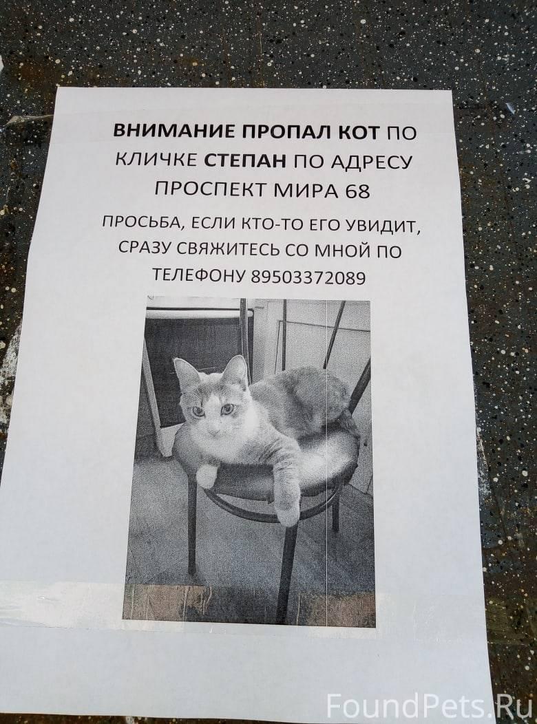 Что делать если потерялся кот или кошка