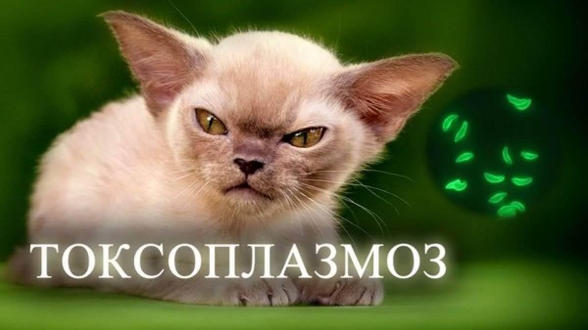 Как понять, что кошка заболела - wikihow