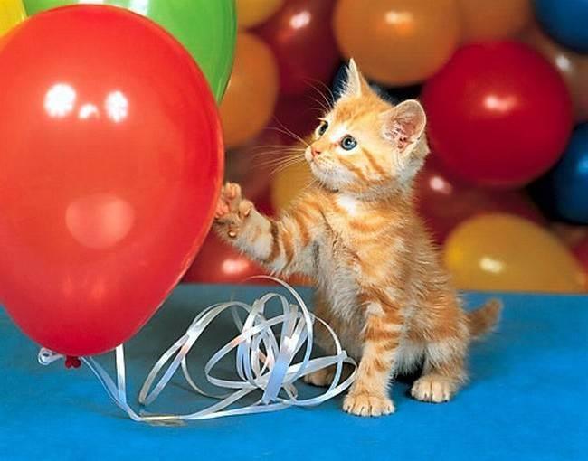 Какую кличку дать рыжему коту. как назвать рыжего котенка-мальчика. возможные варианты