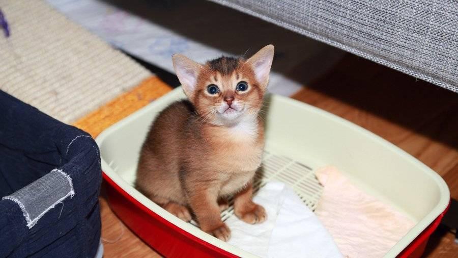 Как приучить котенка или взрослую кошку к домику или лежанке, чтобы питомец ночью спал на своем месте?